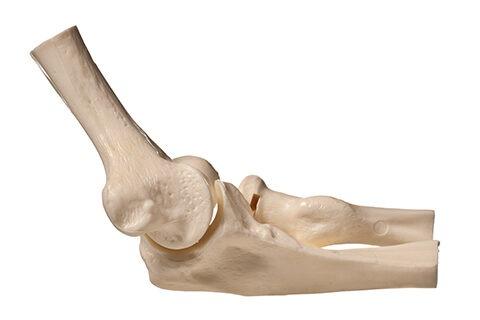 anatomy of elbow 1