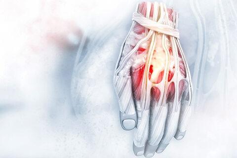 anatomy of hand 2