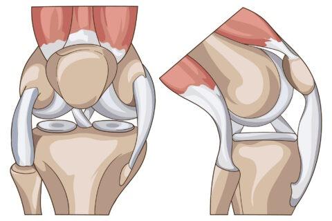 anatomy of knee 2 -01